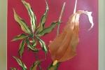 fiori-giovanni-ticciati-volterra