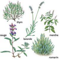 Conoscere le piante ad uso alimentare