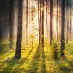 """""""Il taglio del bosco"""""""